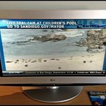 Live Broadcast of the Beach - Seal Cam - Playing on the TV