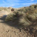 The wonderful sand dunes opposite the hotel
