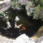 fish pond!