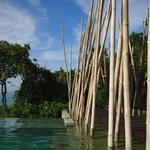 Bamboo by the main pool