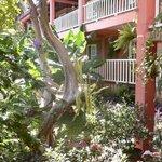 il giardino e le stanze