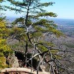 Tree on Crowders Mountain