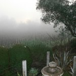 View from Kate's cottage patio - early morning fog on the vineyard