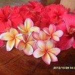 Hibiscus & Frangipani