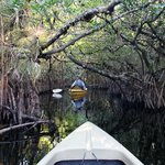 Mangrove tunnels were such an exciting place to canoe