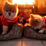 Holiday Twins by our Fireplace