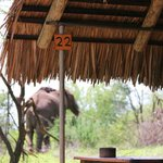 Our encounter with an elephant