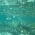 Fish in the Melia Cove - Bring bread in a water bottle to feed