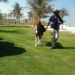 'Horse riding'