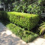 nice hedges outside reception