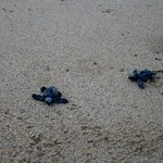 Turtles on the beach!
