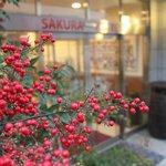Hotel Sakura Hatagaya: Red berries beside the entrance. February 2013