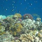 det blå 'röda havet'