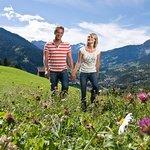 Traumhafte Alpenwiesen