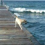 Cobalt Coast Resort, Ivan chasing waves... so cute!