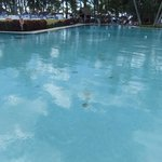 moyen la piscine pour un hotel sois disant 4 etoiles