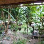 Bungalow n.8 - view from veranda