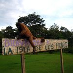 Foto de La Isla De Los Monos