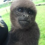 Anita (Woolly Monkey)