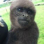 Anita (Woolly Monkey)