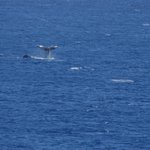 Whale tail from lanai
