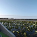 View from the boat - Wild Willy's Airboat Tour
