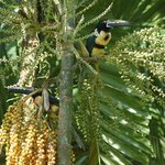 Aracari at Dining Room