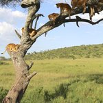 amazing Serengeti