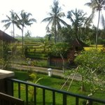 View across the rice fields from balcony