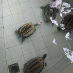 at the entrance of the resort, there is a turtle place to visit