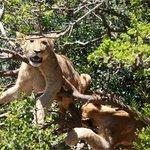 Addo/ Schotia safari special- stay 2nd night free