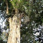 The horse shaped tree