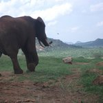 close with the elephants