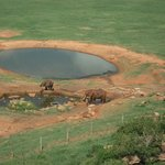 elephants have a drink
