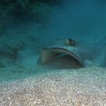 Turtles, rays, sharks... if you are looking for big encounters, Saba is your p