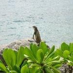 iguanas del hotel