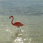 flamingo beach - isla renaissance