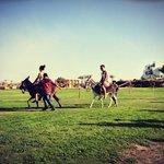 Donkey Race!