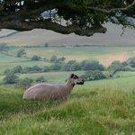 Wonderful walks in Dorset