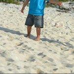Plage composée de sable et de morceaux de coreaux