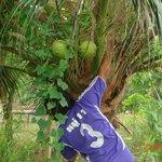 Notre dessert- noix de coco