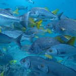 Underwater Life diving with Scuba Galapagos at 4 Hermanos