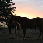 bellos caballos...