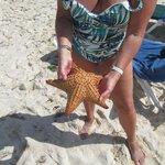 Grosse etoile de mer vivante remis a la mer bien sur