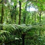 Amazing Vegetation