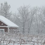 Snowfall in the vineyard
