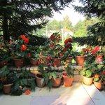 Beautiful Blooming Begonias