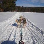 Barking Brook Sled Dog Adventures - Day Trips Foto