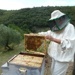 Ilaria bee-keeping