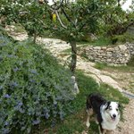 family pet and fruit trees